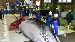 Pekerja menuangkan sake ketubuh Paus Minke yang ditangkap di Kushiro, Hokkaido, Jepang (1/7/2019). Keputusan perburuan Paus Minke tersebut mengundang kecaman dari para aktivis dan negara-negara antiperburuan paus. (AFP Photo/Kazuhiro Nogi)