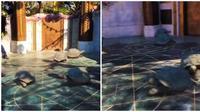 Warganet ungkap merasa tertipu dengan kenyataan kura-kura berjalan lambat. (Sumber: Twitter/MiHeroeSinCapa)