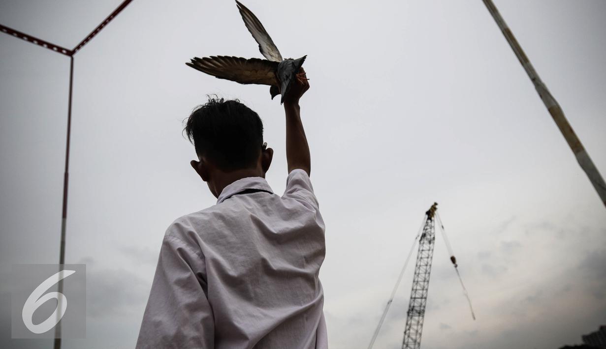 Seorang remaja mengepakan burung merpati betina agar merpati pasangannya menghampiri saat berlatih adu ketangkasan di Sunter, Jakarta, Selasa (29/11). Burung merpati atau yang biasa disebut burung dara ini banyak dipelihara. (Liputan6.com/Faizal Fanani)