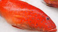 Ikan kerapu. Foto: friedchillies
