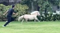 Kuda poni balapan lari dengan pemiliknya (Screenshot of Instagram/@sakshisingh_r)