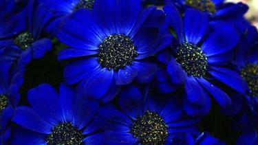 Bunga Berwarna Biru Alami Super Cantik Dan Mengagumkan Fashion