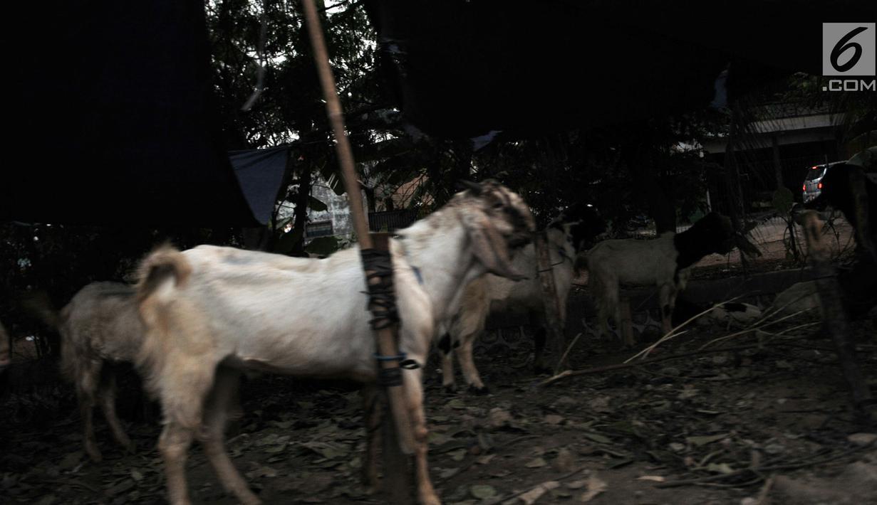 FOTO Tak Ada Lahan Pedagang Nekat Jual Hewan Kurban Di