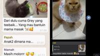 6 Chat Ibu ke Grup Keluarga Bahas Kucing Ini Bikin Tepuk Jidat (sumber: Twitter/nvitaaw/twitkocheng)