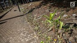 Tanaman yang menjadi korban dari injakan kaki sederet oknum suporter Final Piala Presiden 2018 di luar Stadion Utama GBK, Jakarta, Minggu (18/2). Kejadian ini amat disayangkan, mengingat GBK baru saja menyelesaikan renovasi. (Liputan6.com/Faizal Fanani)