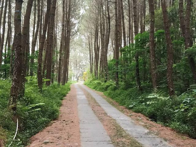 5 Wisata Hutan Pinus Di Malang Yang Instagramable Surabaya Liputan6 Com