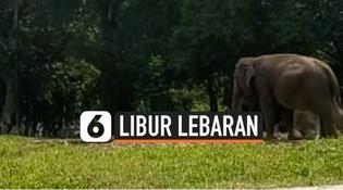 VIDEO: Suasana Taman Margasatwa Ragunan di Hari Kedua Libur Lebaran