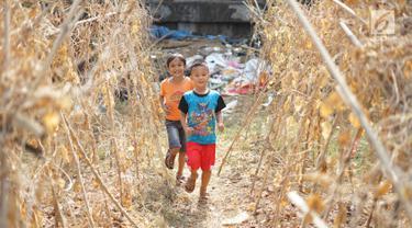 Anak-anak bermain di sekitar tanaman yang mengering bantaran kanal banjir barat (KBB), Jakarta, Kamis (25/7). Musim kemarau panjang yang terjadi di Ibu Kota menyebabkan pekarangan warga di sepanjang KBB mengalami kekeringan. (Liputan6.com/Immanuel Antonius)