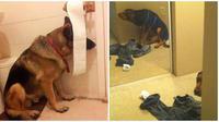Aksi anjing bersembunyi (Sumber: Brightside)