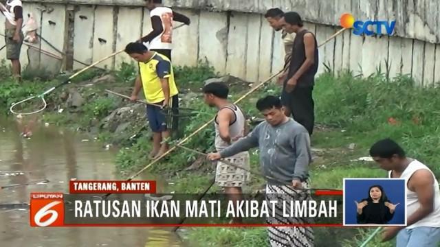 Ratusan ikan di kali Cisadane, Tangerang, mabuk dan mati akibat pencemaran dari limbah, warga berbondong-bondang tangkap ikan-ikan tersebut.