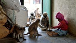 Samarth Bangari (2) memberi makan temannya yang merupakan kumpulan monyet di rumahnya di Allapur, India, 8 Desember 2017. Pertemanan Bangari yang tidak biasa ini diketahui saat bocah yitu terlihat bermain dengan dua lusin monyet. (Manjunath KIRAN/AFP)