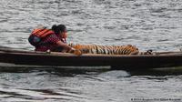 drh. Erni Suyanti Musabine dan Harimau Terluka di Sebuah Perahu. Foto : BKSDA Bengkulu   Erni Suyanti Musabine