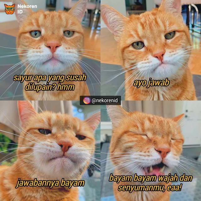 7 Meme Kucing Saat Pdkt Ini Kocak Bikin Ngakak Hot Liputan6 Com