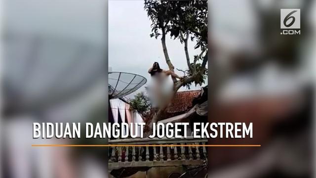 Aksi seorang biduan dangdut berjoget hingga ke atas pohon bikin warganet berkomentar.