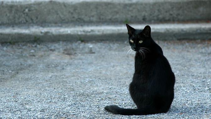 4 Fakta Menyenangkan Tentang Kucing Berwarna Hitam Lifestyle Fimela Com