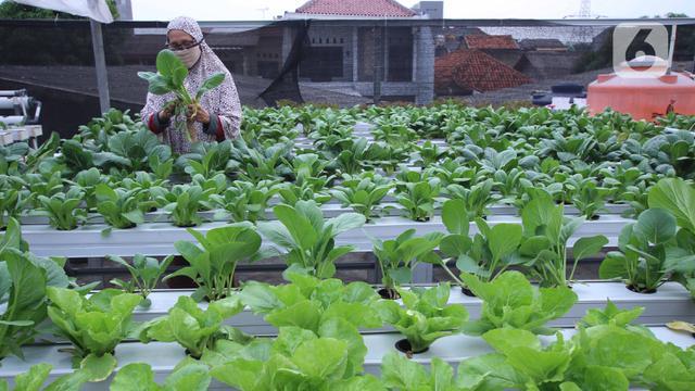 Urban Farming, Solusi Atasi Kesulitan Pangan Selama Pandemi COVID-19