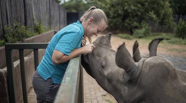 Direktur Yolande Van Der Merwe (38) bermain dengan anak badak di Panti Asuhan Badak di lokasi yang dirahasiakan dekat Mokopane, Provinsi Limpopo, Afrika Selatan, 9 Januari 2021. Panti ini adalah pusat non-komersial khusus pertama yang merawat bayi badak yatim piatu dan terluka. (Michele Spatari/AFP)