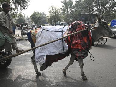 Seekor sapi ditutupi dengan selimut dan lembaran plastik untuk melindungi dari cuaca dingin di New Delhi, India, Selasa (5/1/2021). Hal tersebut untuk melindungi sapi agar tetap hangat selama bulan-bulan musim dingin. (Photo by Sajjad HUSSAIN / AFP)