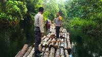 Personel Polres Siak berdiri di atas rakit yang merupakan pohon hasil pembalakan liar. (Liputan6.com/M Syukur)