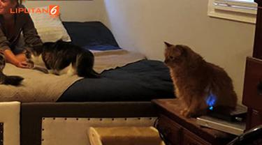 Tempat tidur yang mereka ciptakan berukuran hingga 7 meter persegi.