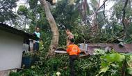 Angin kencang menerjang Banyumas, Jawa Tengah, Minggu sore, 11 November 2018. (Liputan6.com/Tagana Banyumas/Muhamad Ridlo)