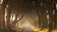 Dark Hedges (iStockphoto)
