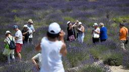 Wisatawan berfoto ketika mereka berjalan melintasi ladang lavender di Valensole, sebelah tenggara Prancis pada 29 Juni 2019. Di wilayah ini terdapat hamparan luas ladang lavender, menyatu cantik dengan lanskap bukit dan pegunungan di belakangnya. (Photo by GERARD JULIEN / AFP)