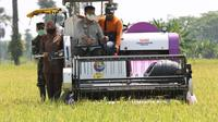 Menteri Pertanian Syahrul Yasin Limpo melakukan panen padi Inbrida di Gapoktan Karya Tani Desa Tanjung Jaya Kecamatan Panimbang Kabupaten Pandeglang.