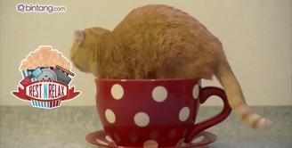 Lucunya Kucing di dalam Cangkir