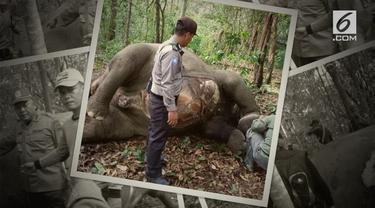 Seekor gajah ditemukan mati di Taman Nasional Way Kambas. Gigi dan gading sudah hilang saat gajah ditemukan.