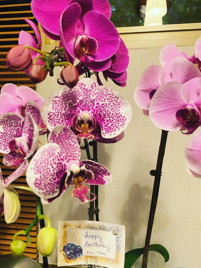 Anggrek Hingga Lili 10 Macam Kepribadian Berdasarkan Bunga