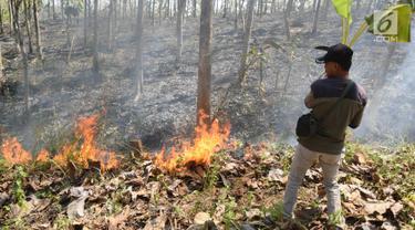 Petugas Dinas Kehutanan berusaha memadamkam api yang membakar hutan jati di Kecamatan Juwangi Boyolali, Jawa Tengah, Senin (6/8). Kebakaran mengakibatkan batang pohon jati kehitaman dan dedaunan menjadi layu. (Liputan6.com/Gholib)