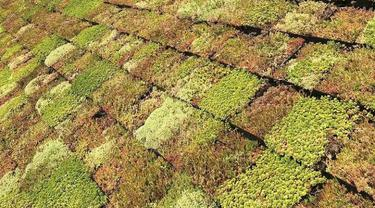 Metode Genteng Hijau, Menghemat Biaya AC di Rumah Sekaligus Ramah Lingkungan