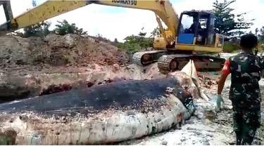 Bangkai paus biru sepanjang 18 meter ditemukan membusuk di perairan Ambon, Maluku, tepatnya di pantai Kampung Baru, Kecamatan Lilialy, Pulau Buru.