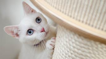 Aksi Menggemaskan Kucing Ikut Naik Pelaminan Saat Pemiliknya Menikah