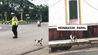 Polisi Bantu Kucing Menyebrang Jalan Raya, Aksinya Banjir Pujian(TikTok/@yandie.f)