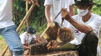 Peternak lebah hutan yang tergabung dalam Kelompok Tani Hutan (KTH) Alam Roban di Desa Kedawung, Batang, Jawa Tengah sebagai binaan Askrindo (dok: Askrindo)
