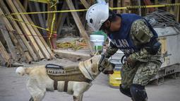 Frida, seekor anjing penyelamat milik Angkatan Laut Meksiko bersama pawangnya Israel Arauz Salinas, mengambil bagian dalam usaha mencari korban gempa yang menghantam Meksiko di sekolah Rebsamen di Mexico City (22/9). (AFP Photo/Omar Torres)