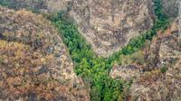 Pohon-pohon langka dijuluki 'pohon dinosaurus' karena asal-usul prasejarahnya. (New South Wales Government)