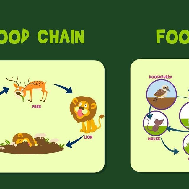 Jaring Jaring Makanan Pengertian Dan Contohnya Yang Wajib
