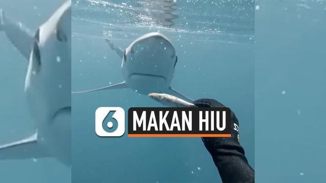 Penyelam asal New Zealand, membagikan video ia tengah memberi makan seekor hiu secara langsung dengan santai. Ia memang dikenal akrab dengan habitat hewan laut buas tersebut.