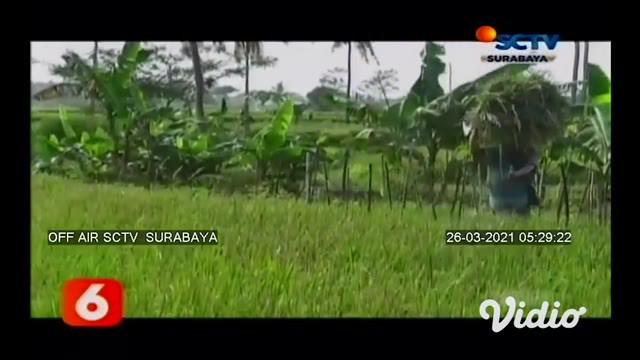 Mantan kepala desa di Lumajang, Jawa Timur, resmi ditahan Kejaksaan Negeri Lumajang, setelah terbukti memindahtangankan hak pengelolaan 6 hektar tanah kas desa kepada orang lain pada tahun 2019.