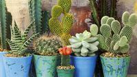 Langkah-langkah tepat merawat tanaman di rumahmu