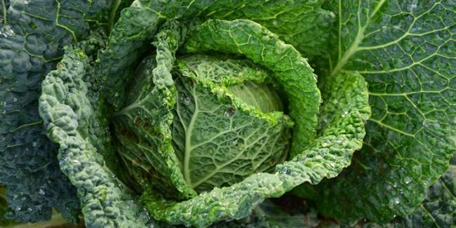 Magnesium bisa didapat dari sayuran hijau/copyright Pixabay.com/ulleo
