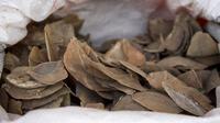 Gambar yang dirilis Badan Taman Nasional pada 23 Juli 2019 menunjukkan karung-karung berisi kulit trenggiling yang disita di Singapura. Gading dan kulit trenggiling itu ditemukan di dalam kontainer pada 21 Juli setelah informasi dari departemen bea cukai China. (Handout/National Parks Board/AFP)