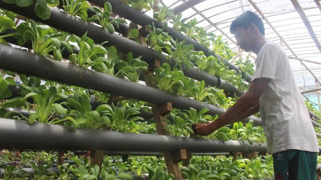 Sayur Hidroponik Makin Marak Di Bali Regional Liputan6 Com