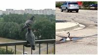 Kelakuan aneh burung (Sumber: Boredpanda)
