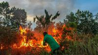 Gawat, Riau Dinyatakan BMKG Rawan Kebakaran Lahan Lagi. (Liputan6.com/M Syukur)