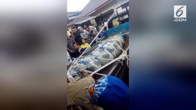 Buaya yang memakan wanita di Minahasa akhirnya ditangkap. Hal ini dilakukan demi pemeriksaan medis yang dilakukan petugas.