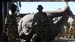 Proses pemindahan puluhan gajah di Lamuria, Nyeri, Kenya, Rabu (21/2). Selain terancam oleh pemburu, gajah-gajah ini juga sering berkonflik dengan para petani yang merasa tanaman mereka dirusak. (AFP PHOTO/SIMON MAINA)